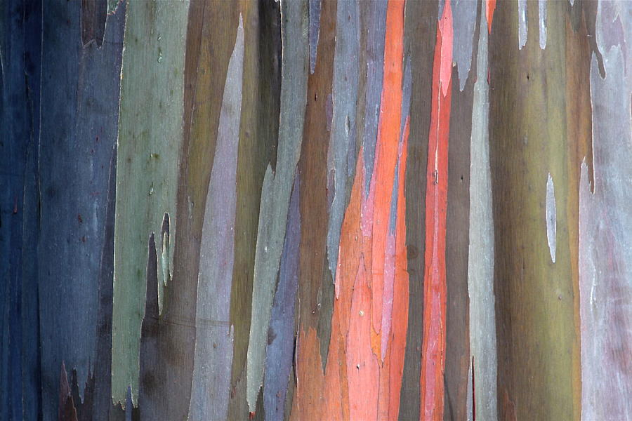 Eucalyptus Photograph - Eucalyptus Tree Bark by Karon Melillo DeVega