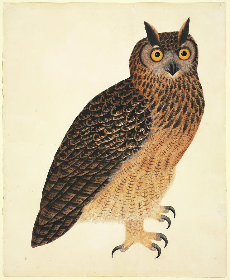 1800s Photograph - Eurasian Eagle-owl by Natural History Museum, London