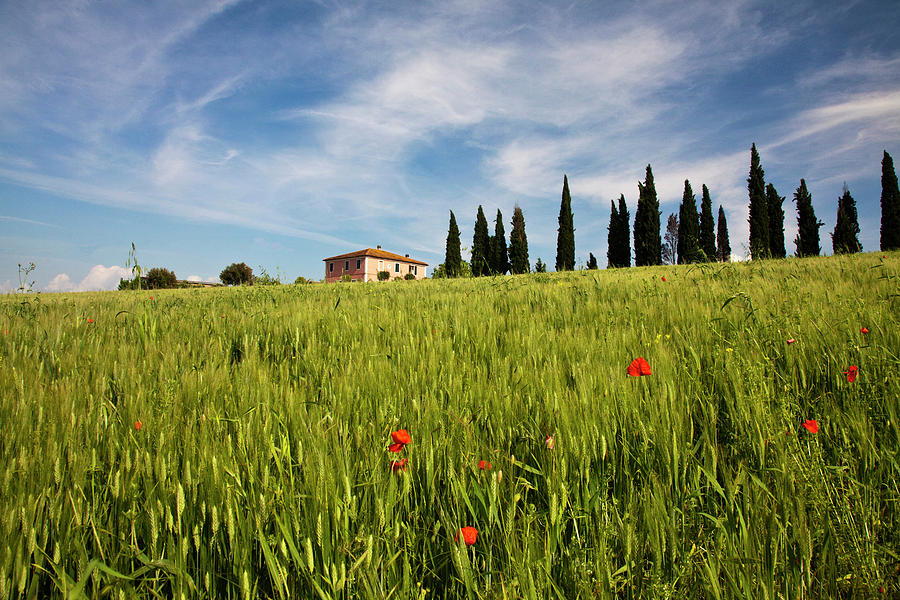 Agricultural Photograph - Europe, Italy, Tuscany by Terry Eggers