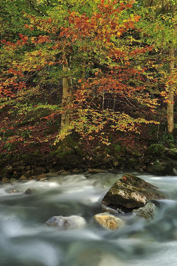 European Beech Forest Switzerland Photograph by Thomas Marent