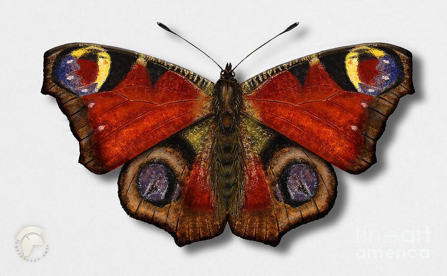 European Peacock - Inachis Io - Paon Du Jour - La Mariposa Pavo Real - Neitoperhonen - Dagpauwoog Painting