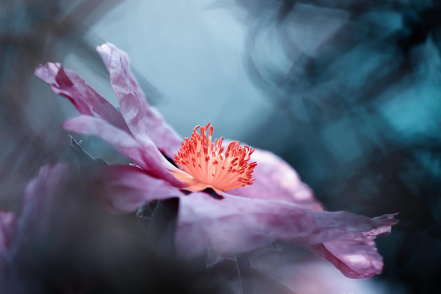Flower Photograph - Even Flowers Have Stories To Tell by Fabien Bravin