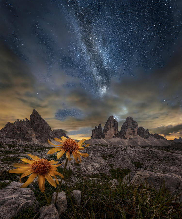 Mountain Photograph - Even The Flowers Seem To Be Fascinated By The Stars by Alberto Ghizzi Panizza