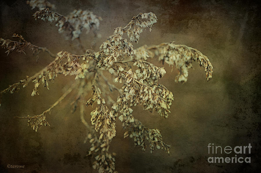 Weeds Photograph - Even Weeds Are Beautiful by Terry Rowe