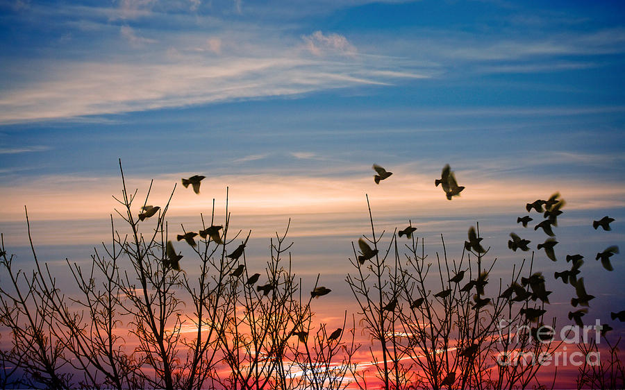 Bird Colony Photograph - Evening Migration by Jolanta Meskauskiene