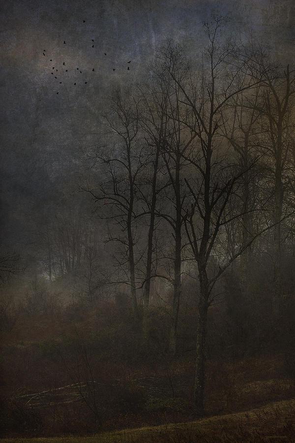Ron Jones Photograph - Evening Mist by Ron Jones