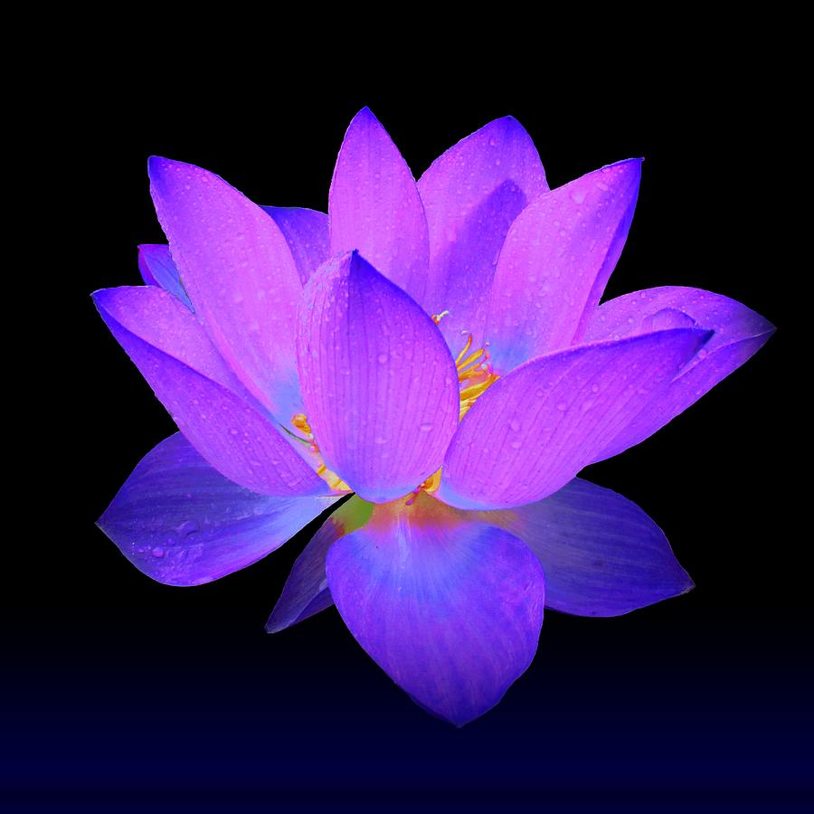 Lotus Flower Cover Photo Flowers Gallery