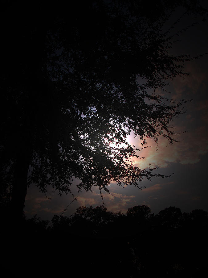 Setting Sun Photograph - Evening Sky by Ella Char