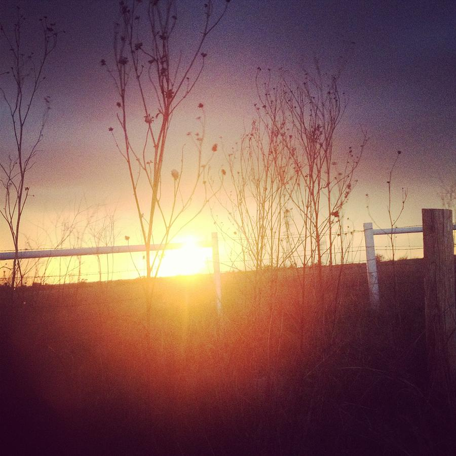 Sun Photograph - Evening Sun by Tara Harper