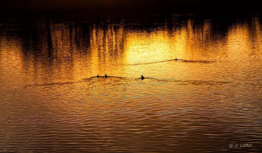 Ducks Photograph - Evening Swim by Jardi Welsch