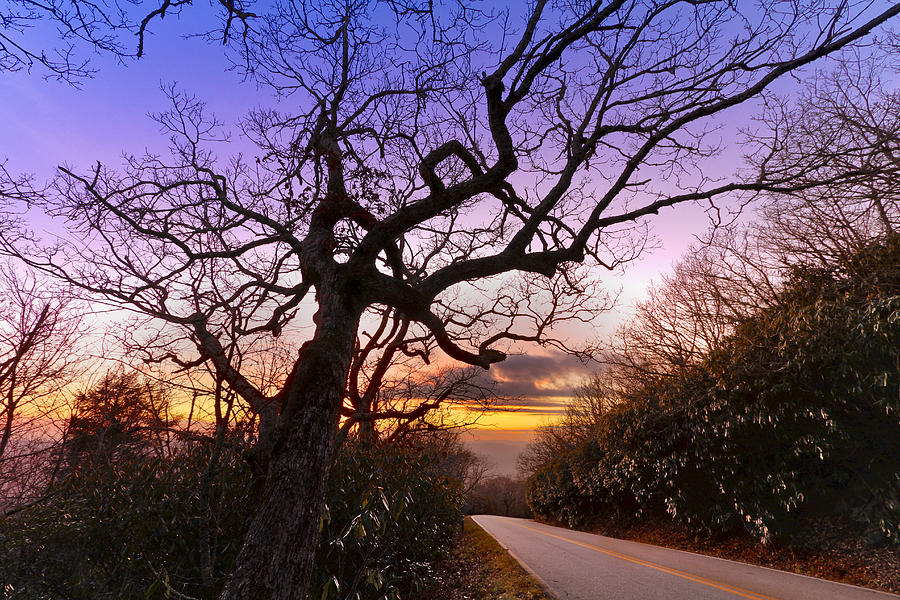Appalachia Photograph - Evening Tree by Debra and Dave Vanderlaan