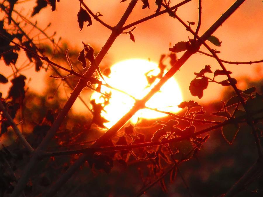 Landscape Photograph - Evening by Vinayak Patukale