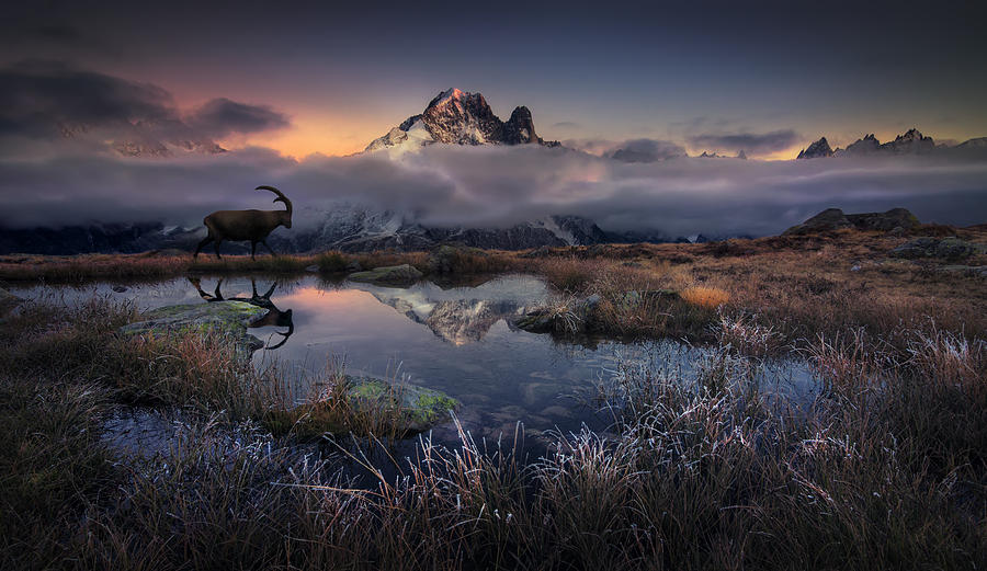 Wildlife Photograph - Evening Walk by Martin Dodrv