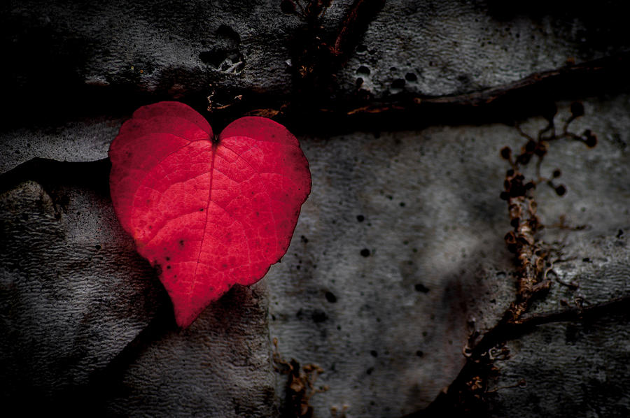 Heart Photograph - Eventually They Fall - Seize The Moment by Jen Baptist