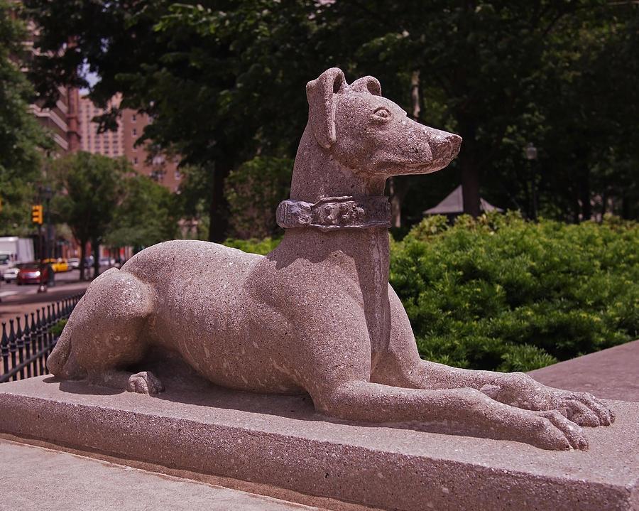 Dog Photograph - Ever Vigilant by Rona Black