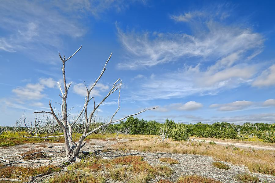 Travel Photograph - Everglades Coastal Prairies by Rudy Umans