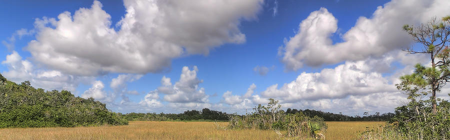 Beautiful Photograph - Everglades Landscape Panorama by Rudy Umans