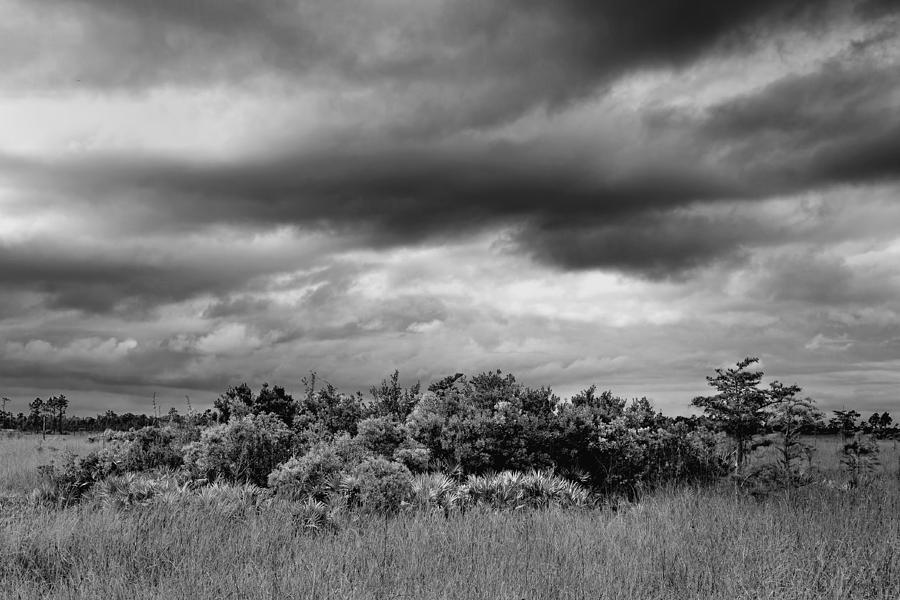 Bush Photograph - Everglades Storm Bw by Rudy Umans