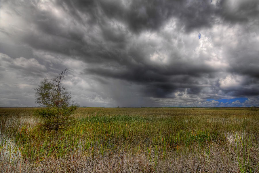 Bush Photograph - Everglades Storm by Rudy Umans