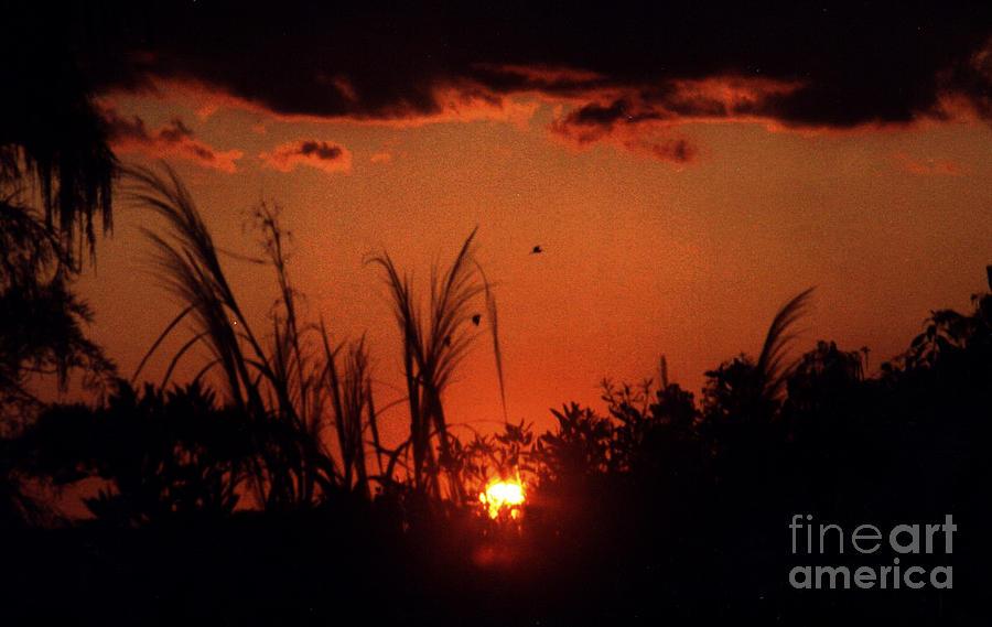 Everglades Photograph - Everglades Sunset by Steven Valkenberg