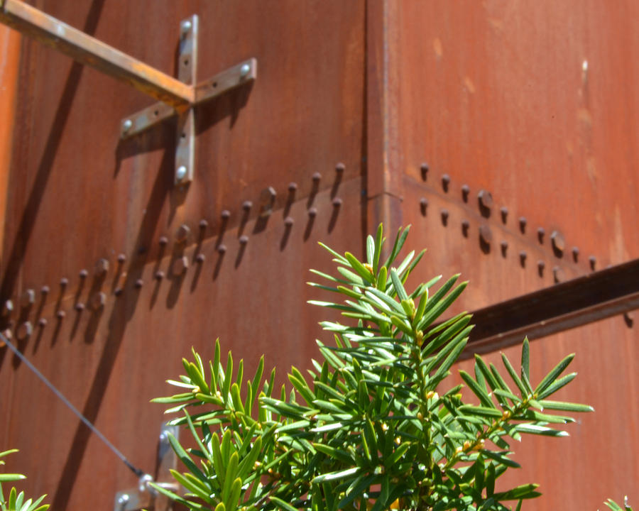 Toronto Photograph - Evergreen Against Rust by Alana Boltwood