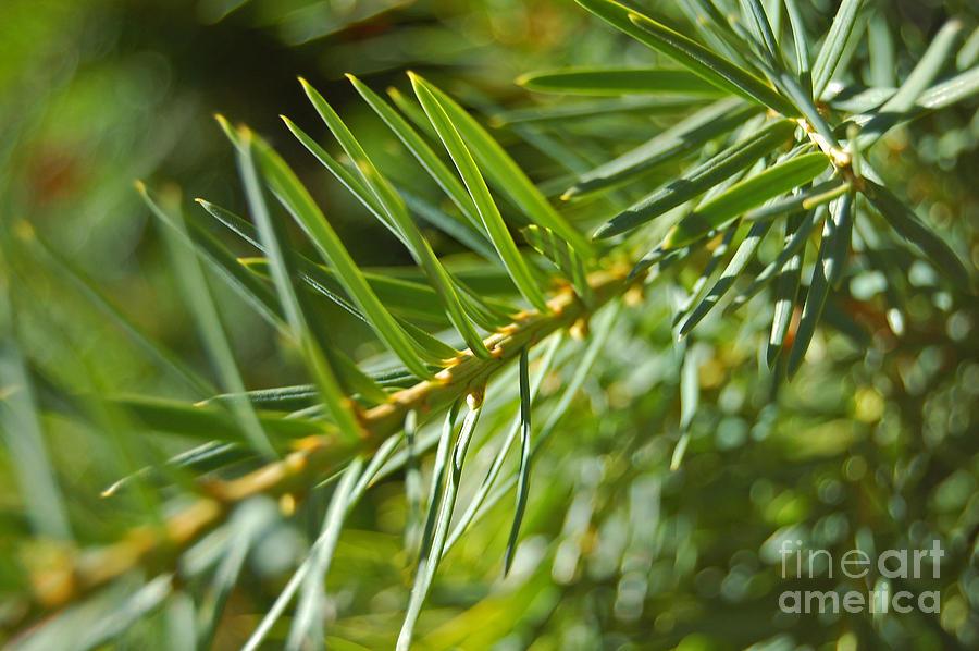 Jrr Photograph - Evergreen Dream By Jrr by First Star Art