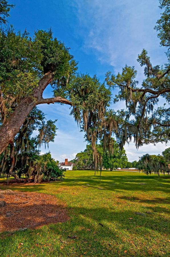 Evergreen Plantation Photograph - Evergreen Plantation II by Steve Harrington