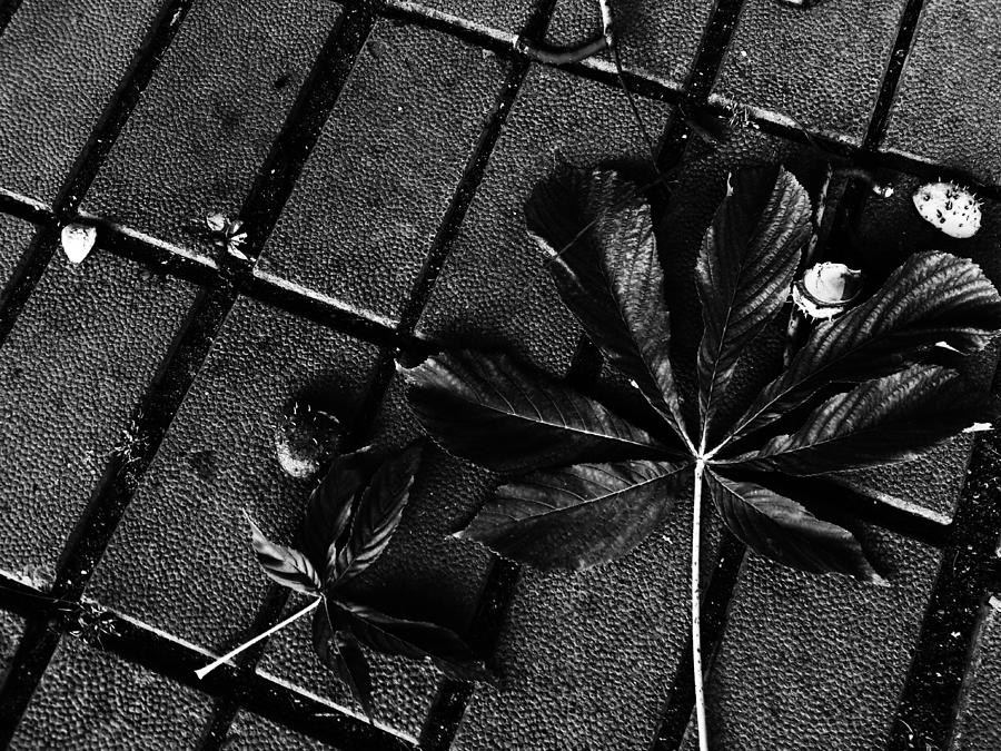 Leaves Photograph - Every Beginning Has An Ending... by Lucy D
