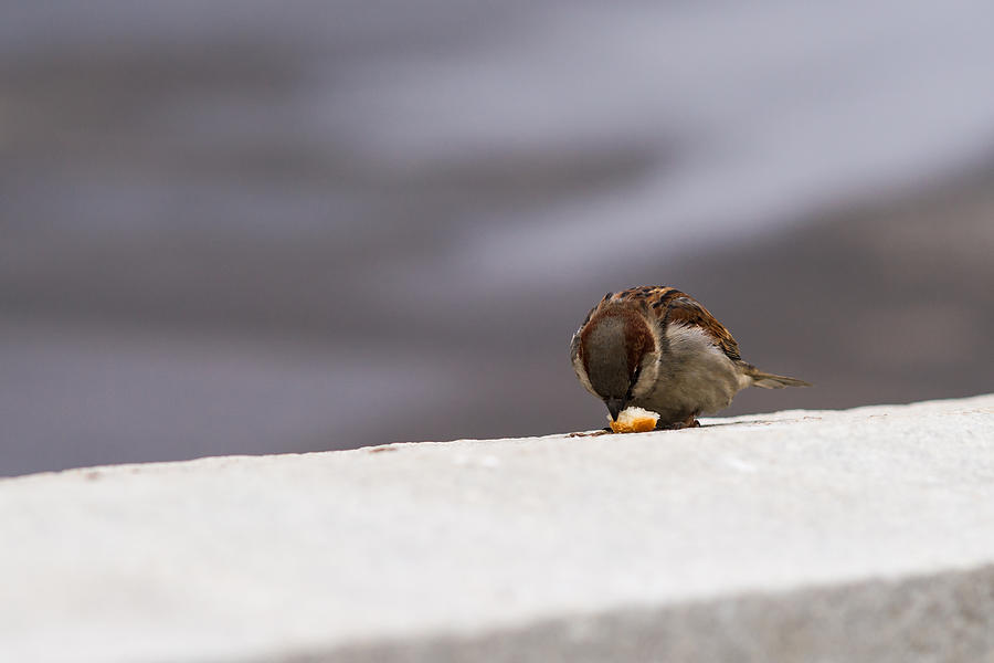 Adorable Photograph - Every Day Brings Its Own Bread - Featured 3 by Alexander Senin