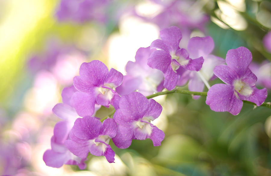 Orchid Photograph - Every Gesture Of Tenderness by Jenny Rainbow