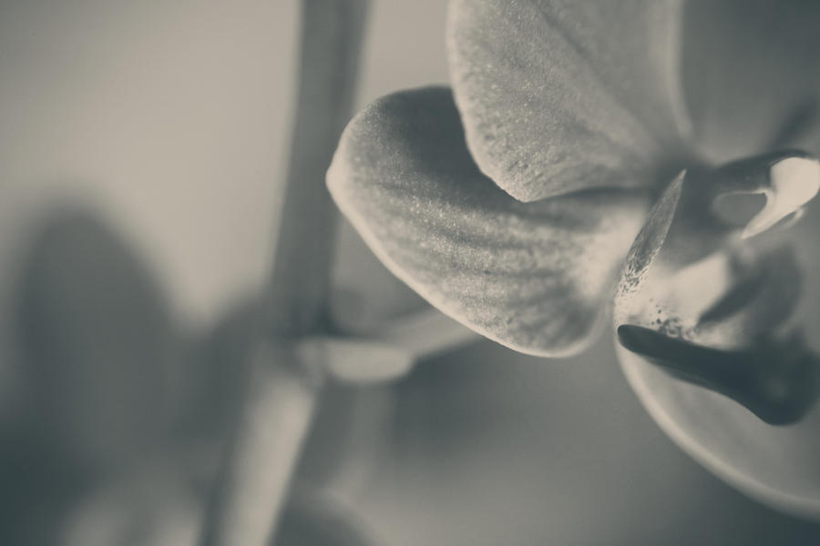 Orchids Photograph - Every Single Moment by Laurie Search