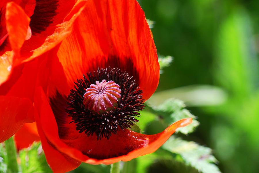 Flower Photograph - #evolve by Becky Furgason