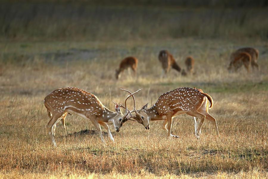Wildlife Photograph - Exchange Of Glances by Nicol?s Merino