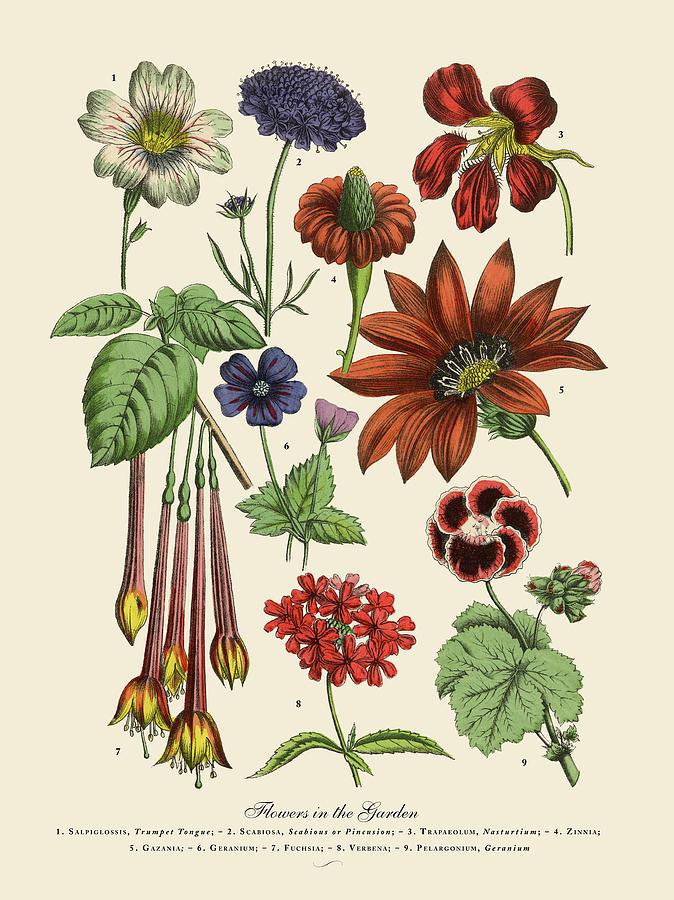 Exotic Flowers Of The Garden, Victorian Digital Art by Bauhaus1000
