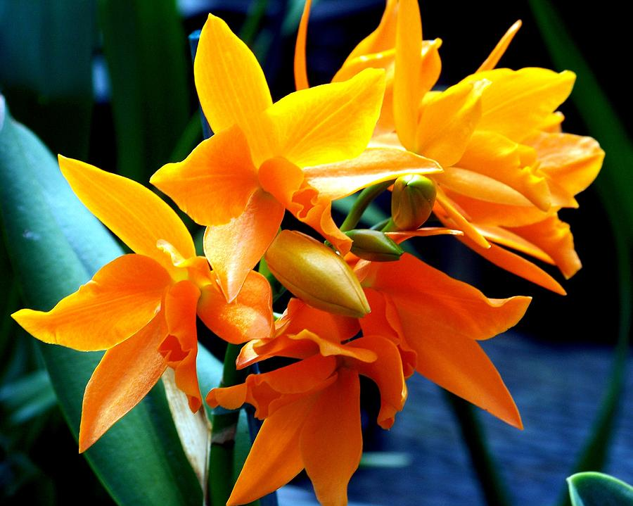 Flowers Photograph - Exotic Orange by Karen Wiles