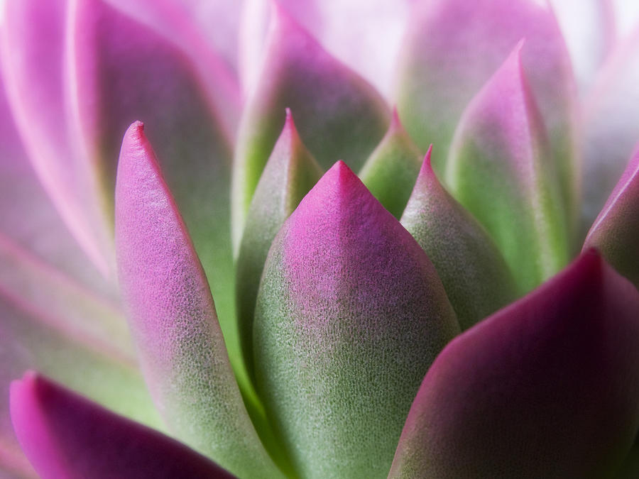 All Photograph - Exotic - Pink Purple Green Flower Landscape Photograph by Artecco Fine Art Photography