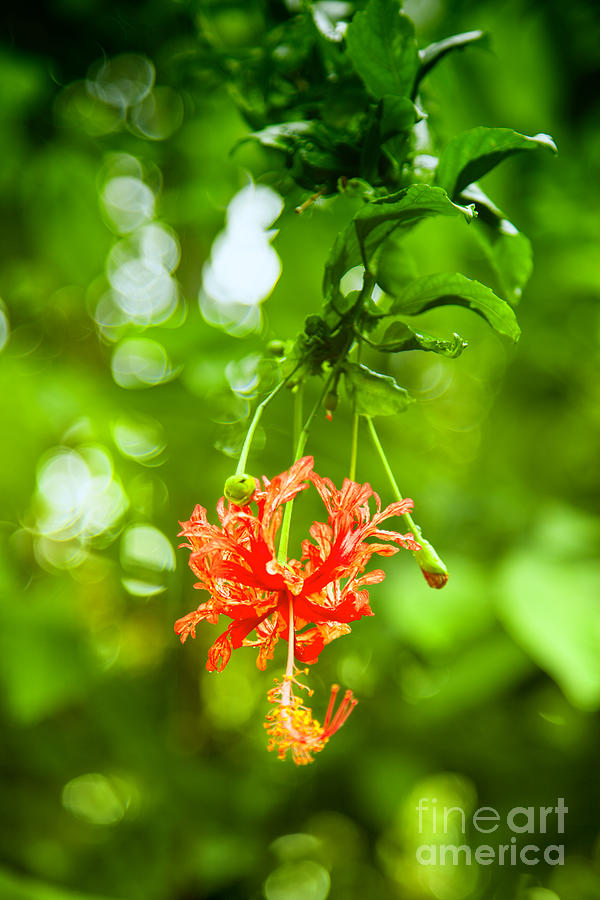 Exotic Photograph - Exotic by Regina Koch