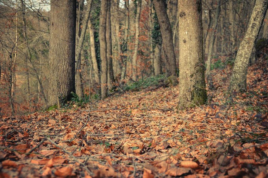 Woods Photograph - Expectation by Taylan Apukovska