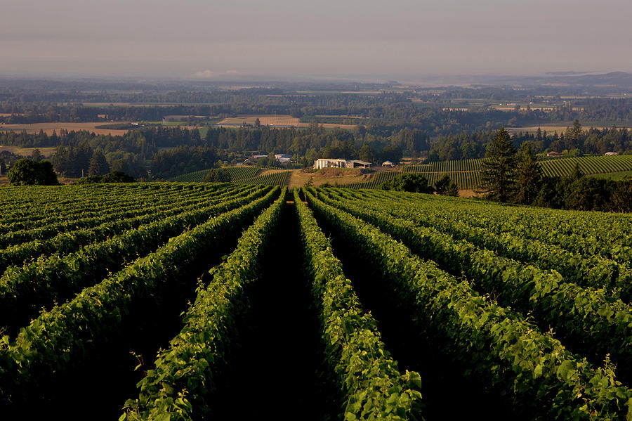 Exploring Oregons Wine Country Photograph by George Rose