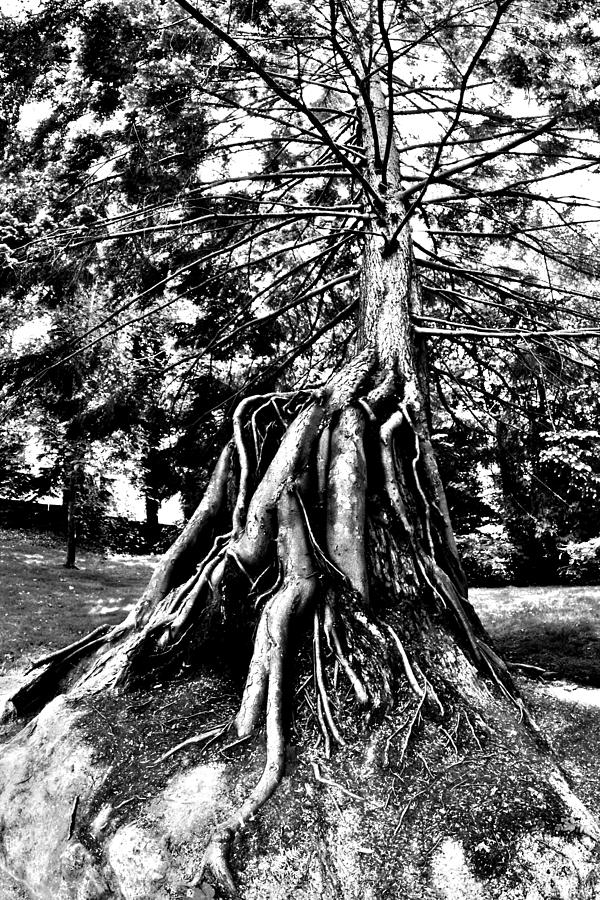 Tree Photograph - Exposed by Benjamin Yeager