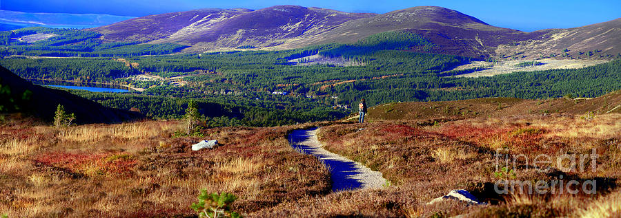 Scotland Photograph - Extasy In Cairngorms National Park Scotland by Lilianna Sokolowska