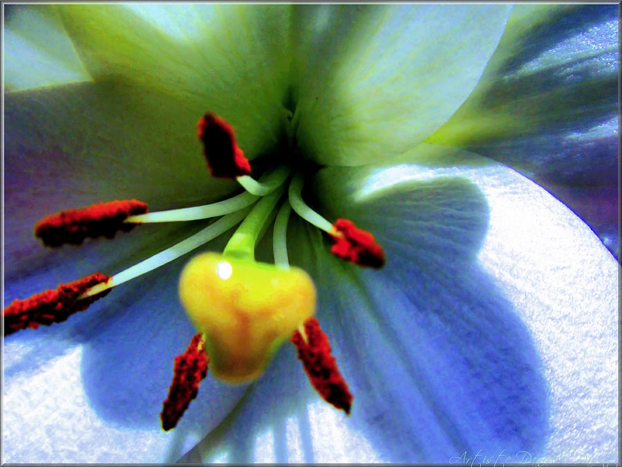 Abstract Photograph - Extrem Lily Heart by Danielle  Parent