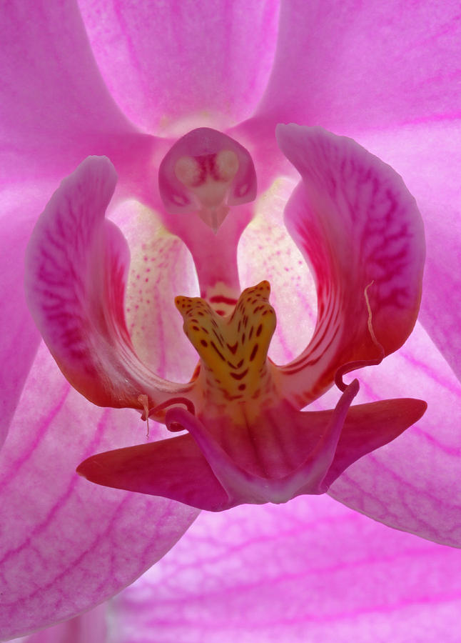 Orchid Photograph - Extremely Loud And Incredibly Close by Juergen Roth