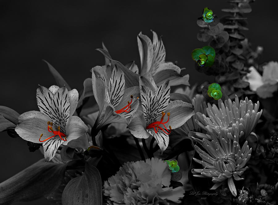 Lily Photograph - Eye Candy by Jeanette C Landstrom