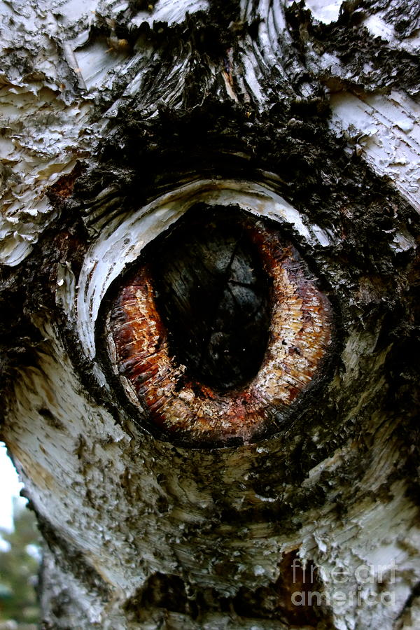 Eye Photograph - Eye In The Tree 1 by Jacqueline Athmann