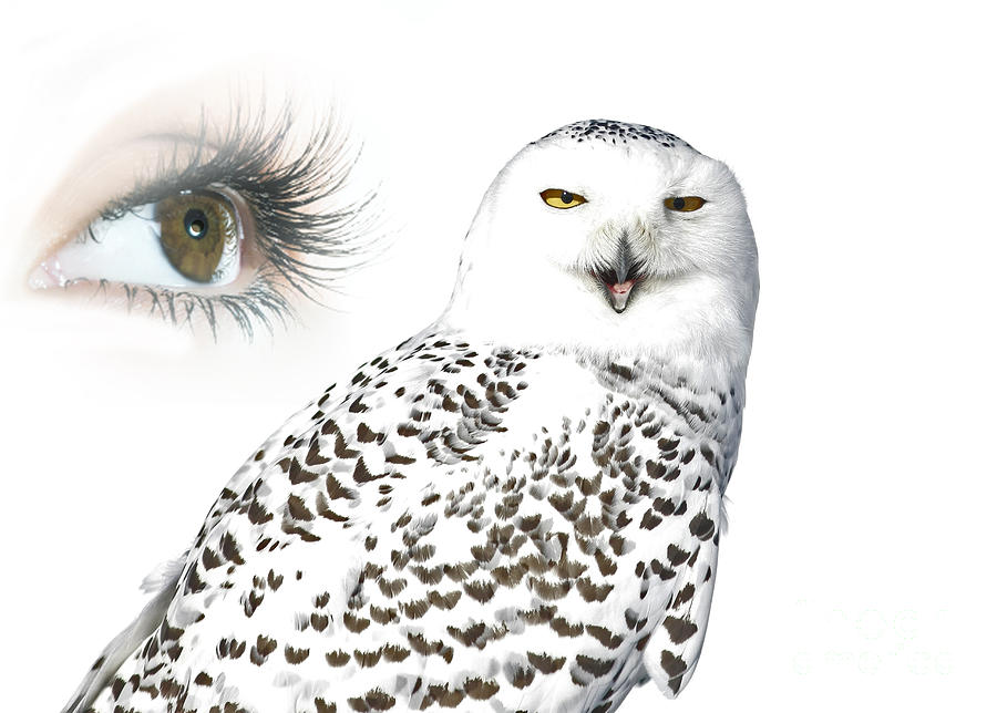 Eye Photograph - Eye Of Purity And The Mysterious Snowy Owl  by Inspired Nature Photography Fine Art Photography