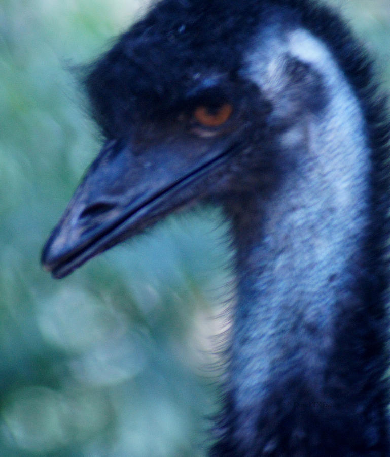 Emu Photograph - Eye Of The Emu by DerekTXFactor Creative