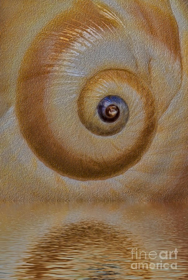 Sea Shell Photograph - Eye Of The Snail by Susan Candelario