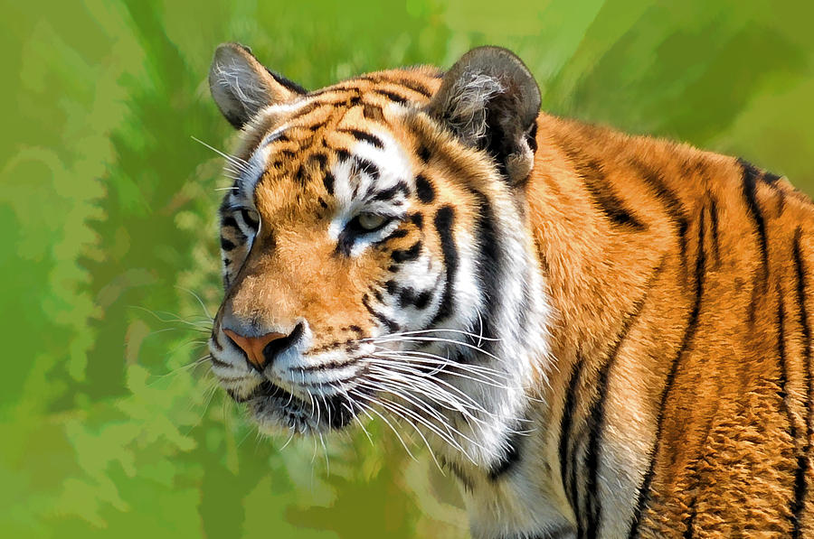 Tiger Photograph - Eye of The Tiger by Liz Mackney