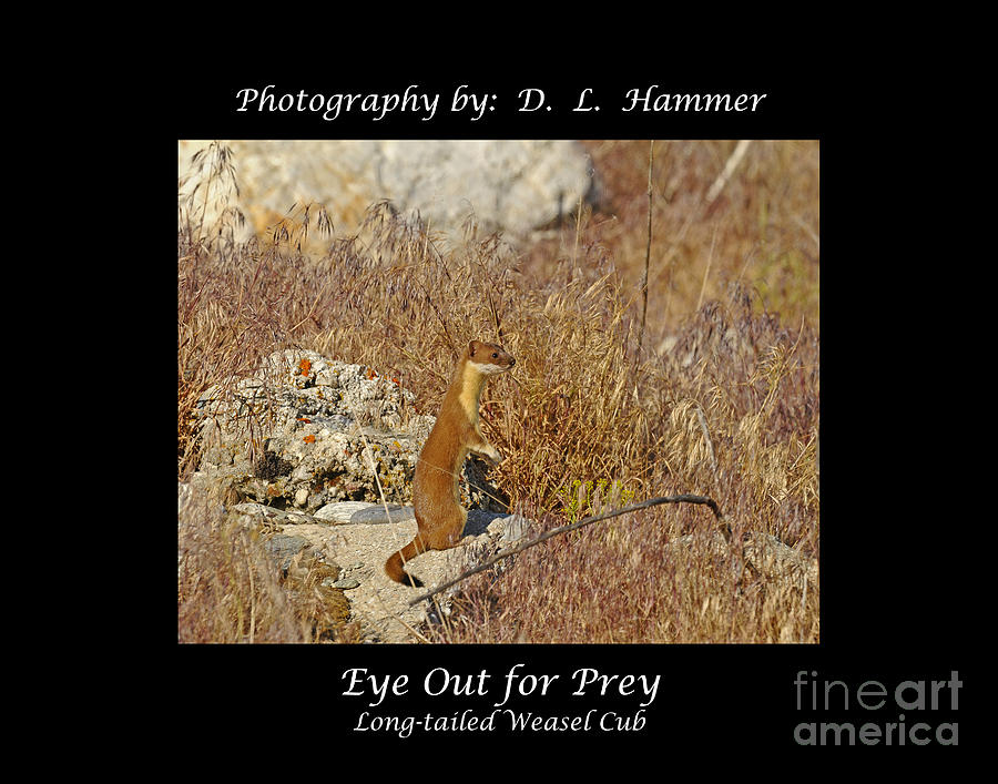 Wildlife Photograph - Eye Out For Prey by Dennis Hammer
